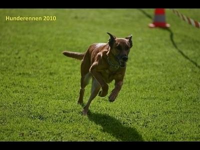 2010-Hunderennen_IMGL1792-400x300