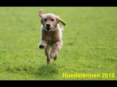 2010-Hunderennen_IMGL1965-400x300
